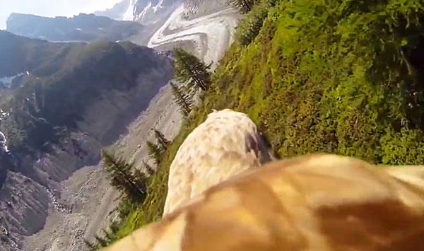 Vuelo de un águila sobre Chamonix con una GoPro