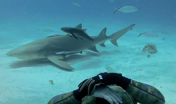 GoPro nadando con tiburones